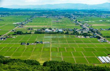 Rice fields of Higashikawa in early spring